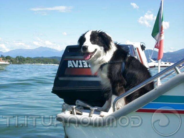 scaletta cani usato
