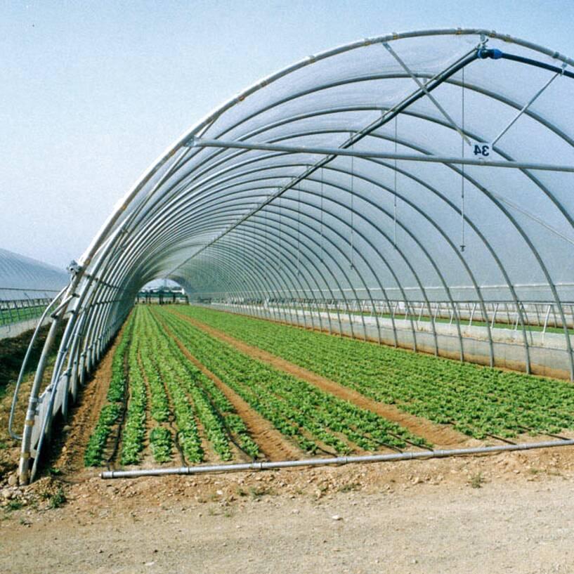 Struttura serre usato in italia vedi tutte i 55 prezzi for Serre agricole usate in vendita