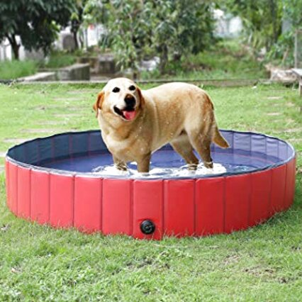 piscina cani usato