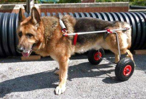 disabili cani usato