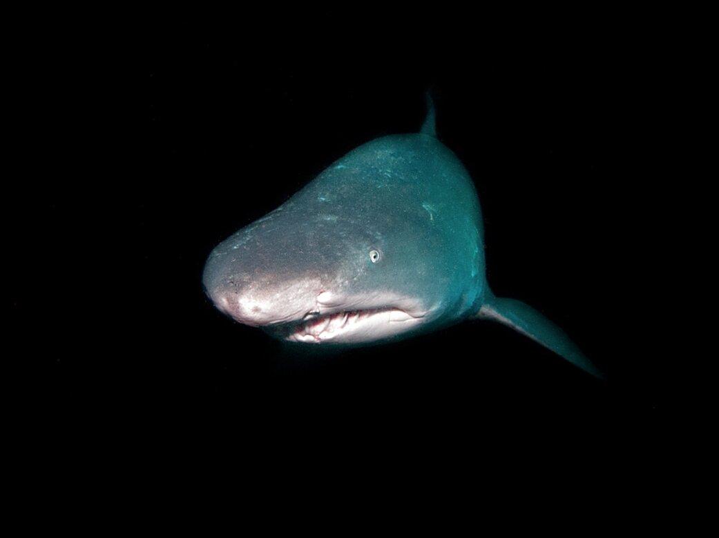 flash subacquei usato