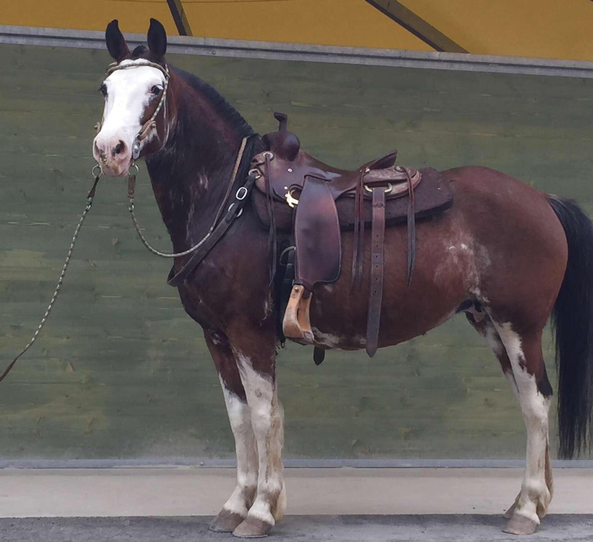 Cavalli Argentini In Regalo.Cavalli Argentini Usato In Italia Vedi Tutte I 10 Prezzi