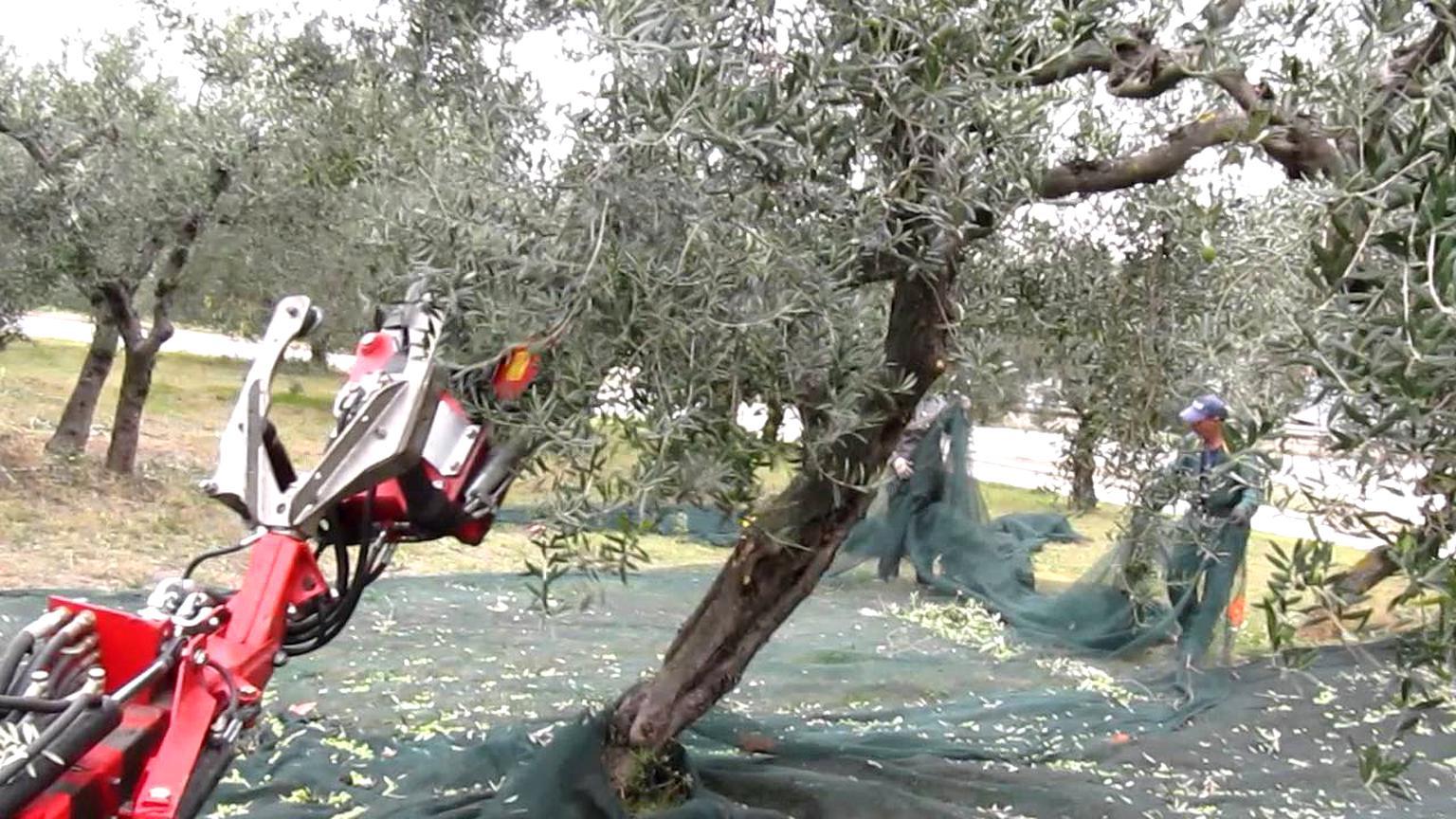 scuotitore olive usato